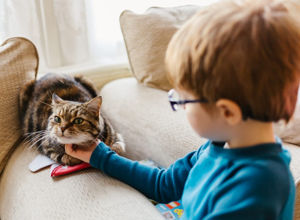 what happens at the home lifestyle photoshoot the oldest brother is playing with a cat - family lifestyle photographer
